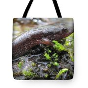 Appalachian Seal Salamander Tote Bag