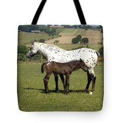 Appaloosa Mare And Foal Tote Bag