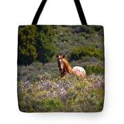 Appaloosa Mustang Horse Tote Bag