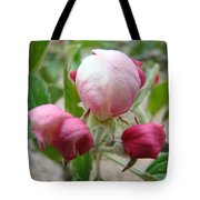 Apple Blossom Buds Art Prints Spring Baslee Troutman Tote Bag