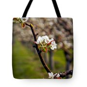 Apple Promise Tote Bag