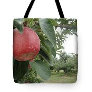 Apples 101010 Tote Bag