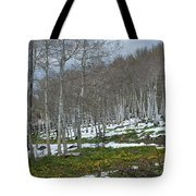 Approaching Spring In The Aspen Forest Tote Bag by Cascade Colors
