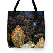Aquarium Stones Arrangement Tote Bag