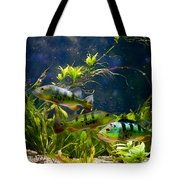 Aquarium Striped Fishes Group Tote Bag