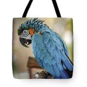 Ara Parrot Tote Bag