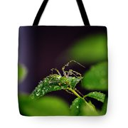 Arachnishower Tote Bag