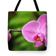 Arboretum Tropical House Orchid Tote Bag
