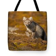 Arctic Fox Striding Out Tote Bag
