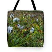 Arctic Gentian Blooming In The Alpine Tote Bag