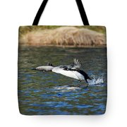 Arctic Loon Take Off Tote Bag