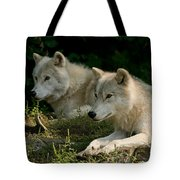 Arctic Wolf Pictures 1268 Tote Bag