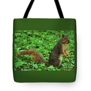 Are You Taking My Picture Again ? Tote Bag