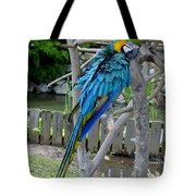 Arent I A Handsome Fellow - Blue And Gold Macaw Tote Bag
