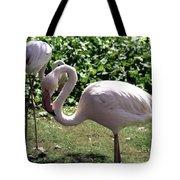 Arizona Flamingos Tote Bag