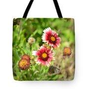 Arizona Sun Blanket Flowers Tote Bag