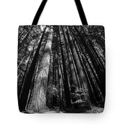 Armstrong National Park Redwoods Filtered Sun Black And White Tote Bag