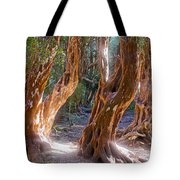 Arrayanes Grove On Trail In Arrayanes National Park Near Bariloche-argentina Tote Bag