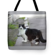 Arrogant Cat Tote Bag