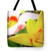 Art Prints Pink Tulip Yellow Tulips Giclee Prints Baslee Troutman Tote Bag
