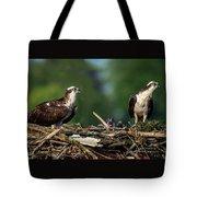 Osprey Family Night Tote Bag