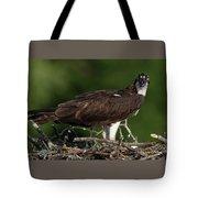 Osprey Portrait Tote Bag
