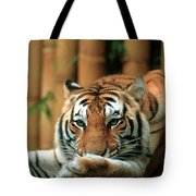 Asian Tiger 5 Tote Bag