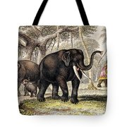 Asiatic Elephant With Young, 19th Tote Bag