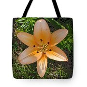Asiatic Lily With Poster Edges Tote Bag