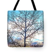 Aspen Tree At Sunset Tote Bag