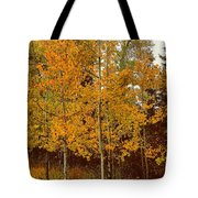 Aspen Trees With Autumn Leaves  Tote Bag
