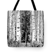 Aspens And The Pine Black And White Fine Art Print Tote Bag