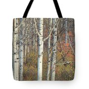 Aspens At Dusk Tote Bag