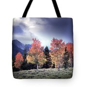 Aspens In Autumn Light Tote Bag