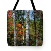 Aspens In Fall Forest Tote Bag
