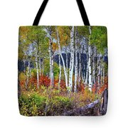 Aspens Meet Autumn Tote Bag