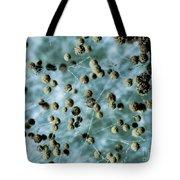 Aspergillum Fungus Tote Bag