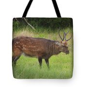 Assateague Sitka Deer Tote Bag