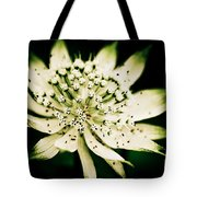 Astrantia In Bloom Tote Bag