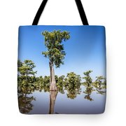 Atchafalaya Cypress Tree Tote Bag