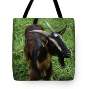 Attractive Goat Standing In A Grass Field On A Farm Tote Bag
