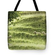 Auckland Sheep Grazing Tote Bag