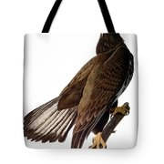 Audubon: Bald Eagle Tote Bag