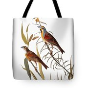 Audubon: Dickcissel Tote Bag