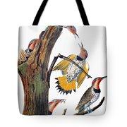 Audubon: Flicker Tote Bag
