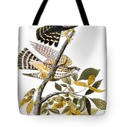 Audubon: Hawk Tote Bag