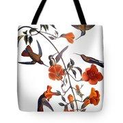 Audubon: Hummingbird Tote Bag by Granger