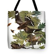 Audubon: Nighthawk Tote Bag