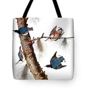 Audubon: Nuthatch Tote Bag