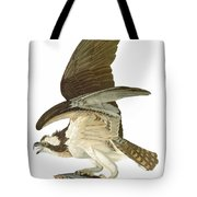 Audubon: Osprey Tote Bag